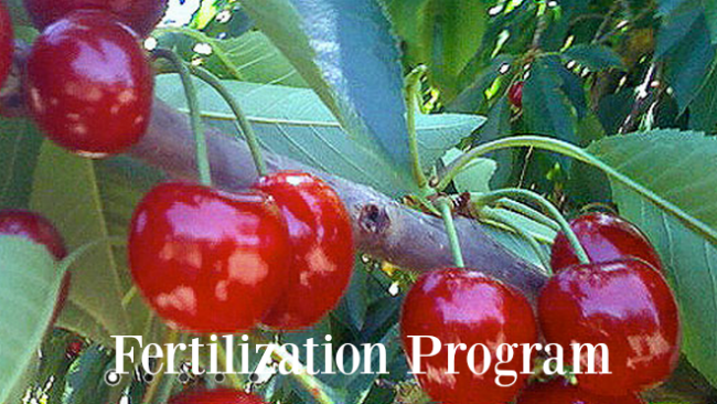 MicroSoil®TailorMade™ Fertilization Program